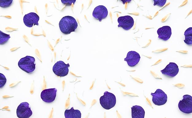 白い背景にコピースペースのある蘭の花びら
