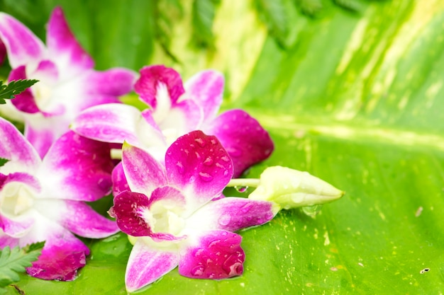 Orchid place on the leaf. spa concept