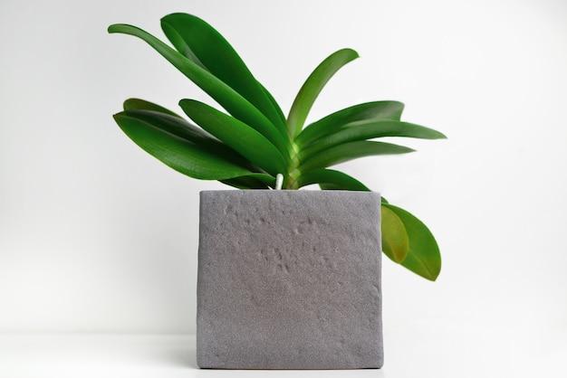 灰色のコンクリートの鉢に蘭の植物がテーブルの上に立っています