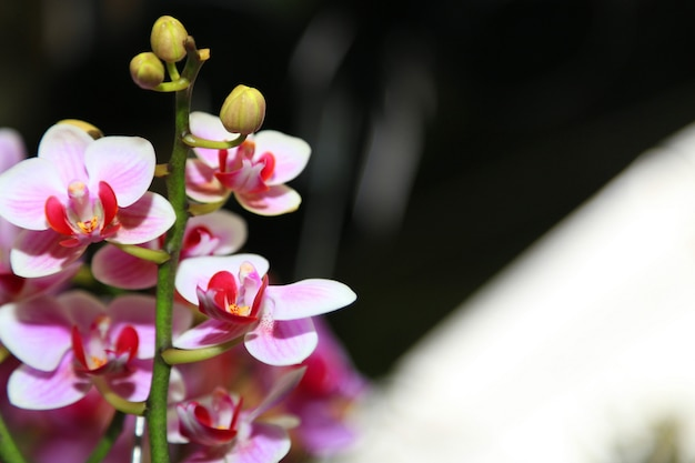 Orchid spring flowers background