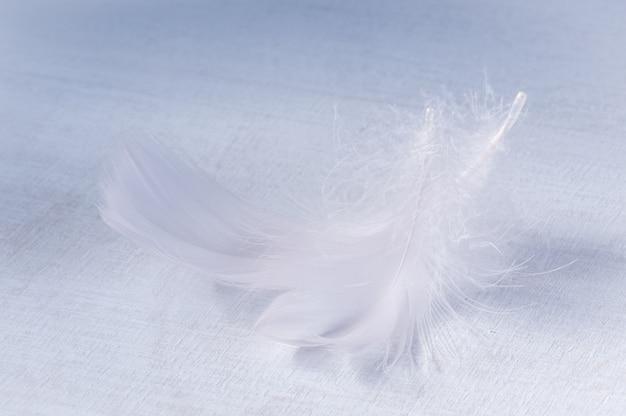 白い木製の背景に蘭の色合いふわふわ羽
