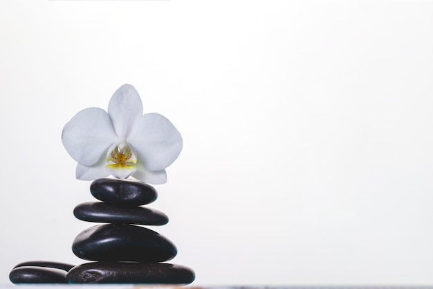 Orchid on volcanic stones on white background