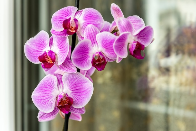 Orchid on the windowsill on the balcony