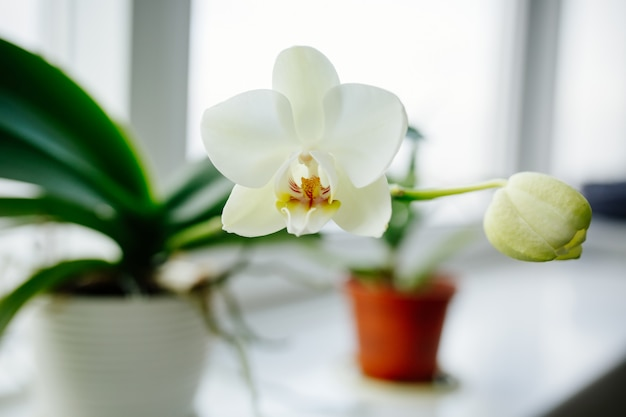Orchids blooming on window of cozy house