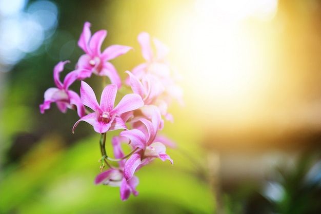 Orchids flower with light flare