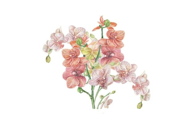 난초 꽃 이국적인 수채화 handdrawn 삽화 클립 아트 사실주의 식물학