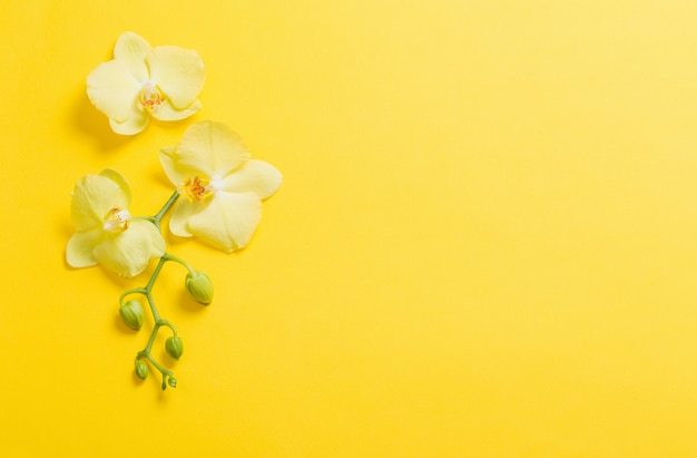 노란 종이 바탕에 난초 꽃