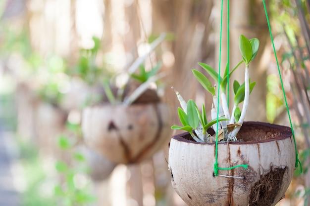 Орхидеи в горшках