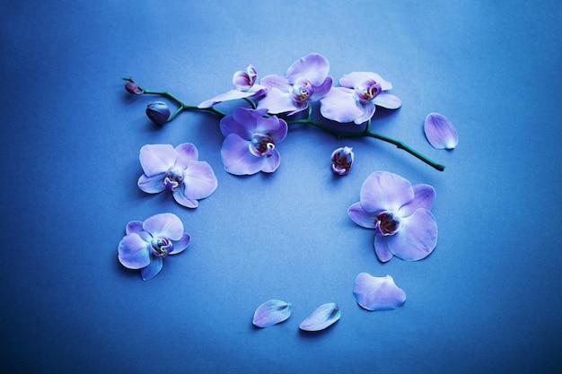 青色の背景に蘭
