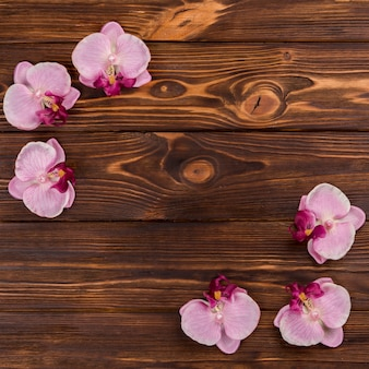 Orchids on wooden tabletop