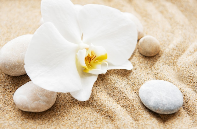 Orchids and stones