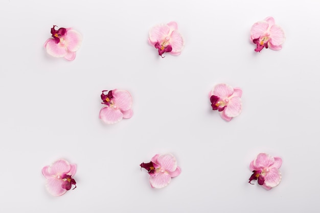 Orchids on white