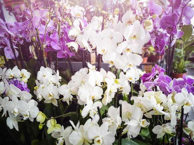 Orchids with white and pink flowers in a flower shop.