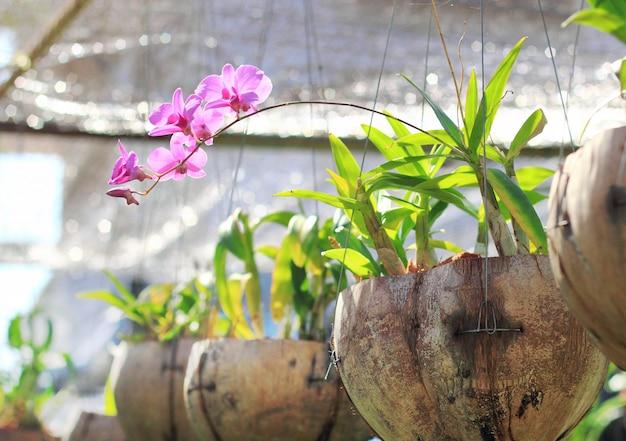 Orcid in flowerpot