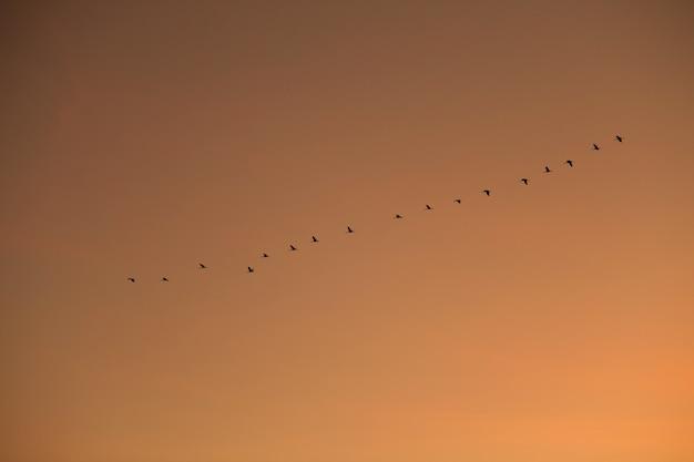 대형 크레인 비행 프리미엄 사진