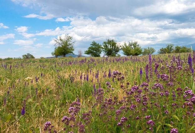オレガノの花フィールドの背景