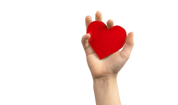 Organ day concept. hand holding red heart isolated on a white background. copy space photo