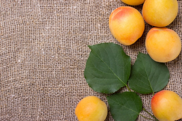 Organic apricots with leaves on sacking background
