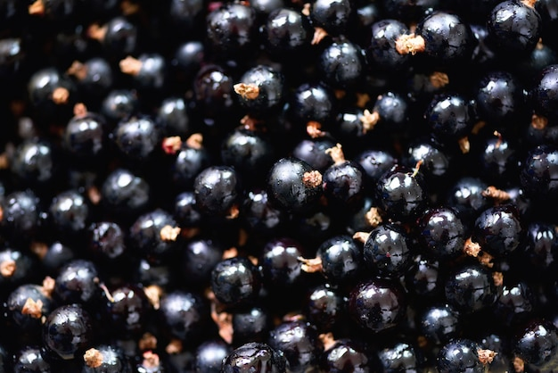 Organic black currant background. vegan and vegetarian concept. summer healthy food.