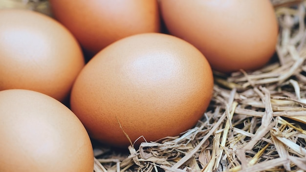 Organic chicken eggs with fang
