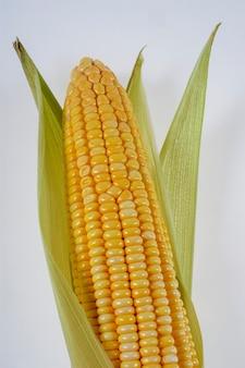 Organic corn cob isolated on white background.