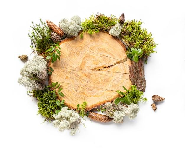 Органическая рама вокруг распиленного ствола дерева из натуральных лесных материалов, мха, коры дерева, шишек, листьев.