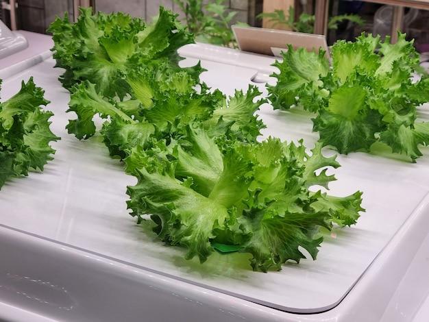 유리 캐비닛에 유기농 신선한 야채