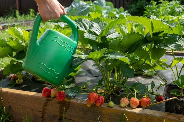 정원에 관개와 작은 식물이 있는 유기농 정원