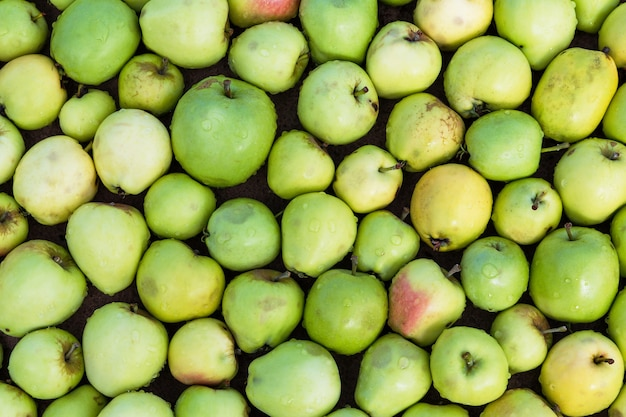 Organic green apples background. top view