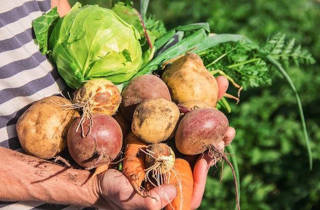 Organic homemade vegetables in the hands of men.