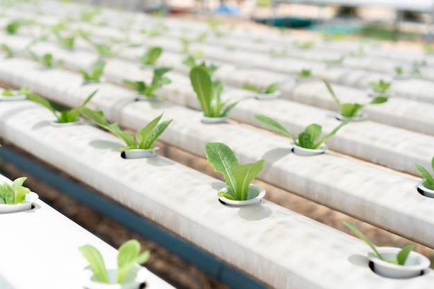 Ферма по выращиванию органических гидропонных овощей. концепция сельского хозяйства и продуктов питания.