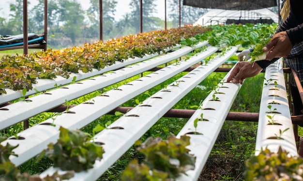 The organic hydroponic vegetable cultivation farm in rural.