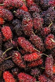 Organic mulberry fruit, black ripe and red unripe mulberries