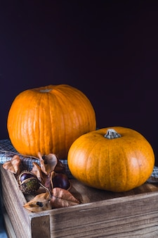 Organic pumpkin and chestnut on wooden table with black backdrop