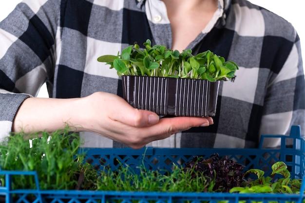 유기농 생 마이크로그린. 여자는 손에 미세 녹색 콩나물이 든 상자를 들고 있습니다. 건강한 슈퍼푸드 식사 개념입니다. 마이크로그린 납품.