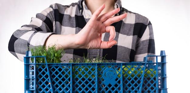 유기농 생 마이크로그린. 여자는 손에 미세 녹색 콩나물이 든 상자를 들고 있습니다. 건강한 슈퍼푸드 식사 개념입니다. 마이크로그린 납품