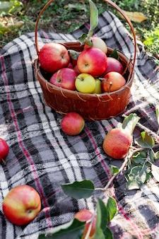 自然の中で田舎の庭で新鮮なリンゴのバスケットの秋の有機赤熟したリンゴ