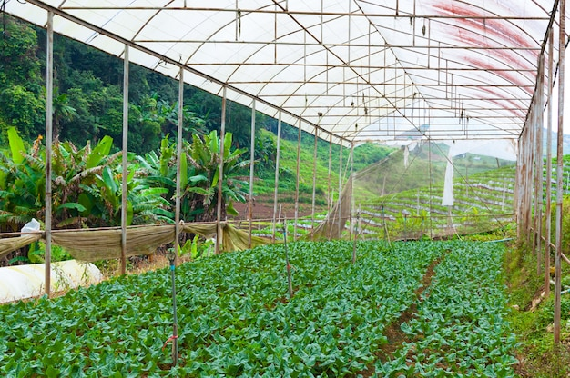 Organic vegetable farm garden