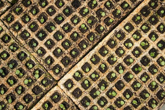 Organic vegetable seedlings, plant seedlings growing on fertile soil with fertilizer