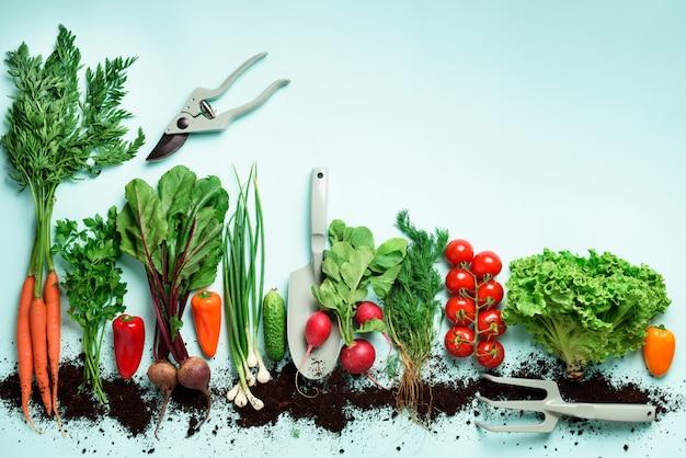 유기농 야채와 정원 도구. 당근, 비트, 고추, 무, 딜, 파슬리, 토마토, 양상추의 상위 뷰.