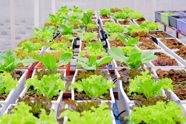 유기농 채소는 온실의 화분에서 재배됩니다.