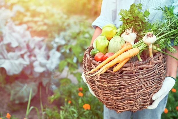 유기농 야채 바구니에 갓 수확한 야채와 여성 농부 손 가을 수확