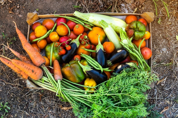 Organic vegetables from the home garden
