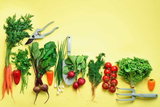 Organic vegetables and garden tools on yellow background with copy space.