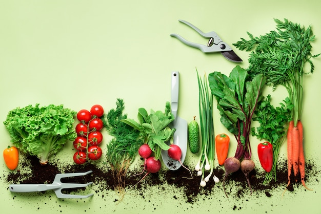 Organic vegetables on green background