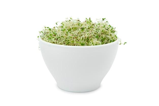 흰색 배경에 컵에 유기농 젊은 알팔파 콩나물 클리핑 패스와 함께 닫습니다