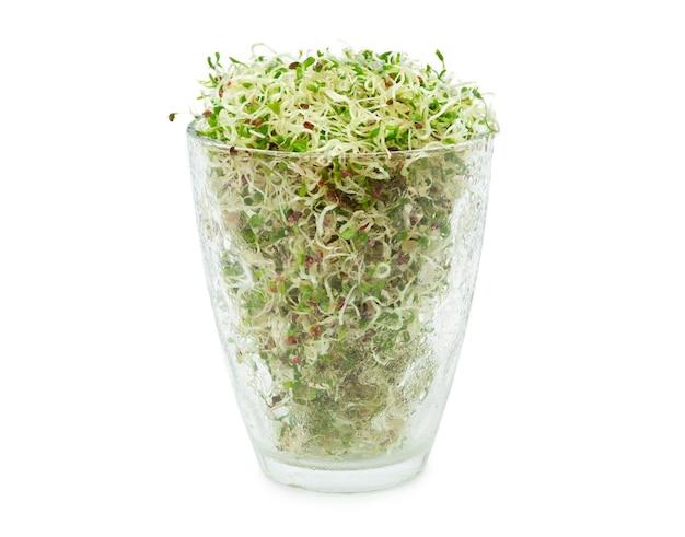 Органические молодые ростки люцерны в стакане на белом фоне. органическая еда. закройте с обтравочного контура