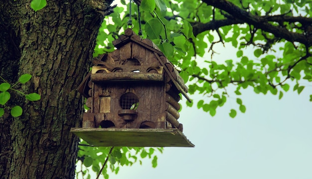 Original interesting bird house on an old tree