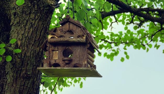 오래 된 나무에 원래 흥미로운 새 집