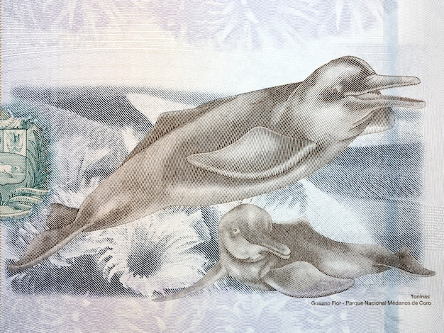 Иллюстрация дельфинов реки ориноко из венесуэльских денег